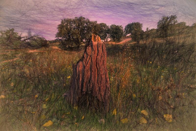 Oct 26 2014 - Hojas sin árbol.  ValdelosHielos. Tres Cantos