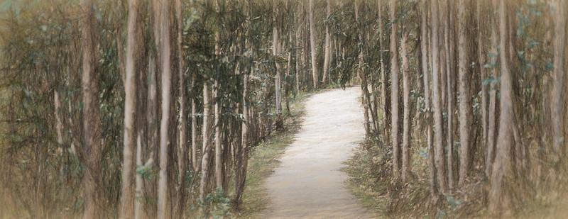 Oct 17 2014 - Eucaliptos de paseo. Ribadeo