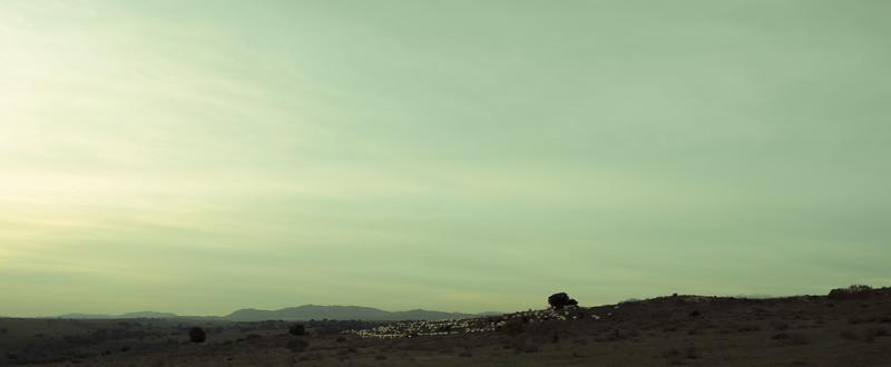 5 de Enero de 2015 - El rebaño. ValdelosHielos. Tres Cantos