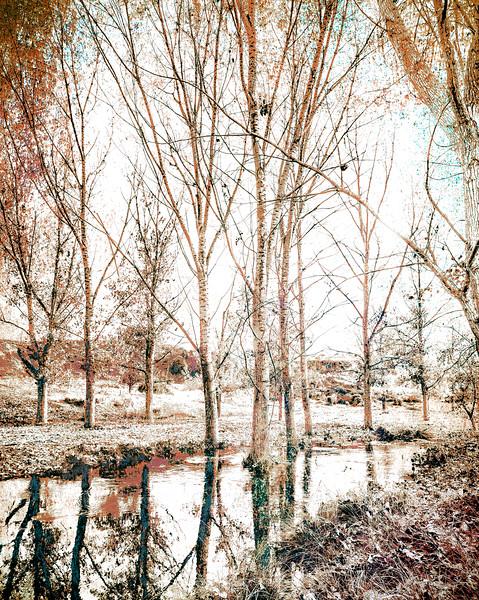 4 de Diciembre de 2014 - Paseo por la orilla. Arroyo Tejada. Tres Cantosd