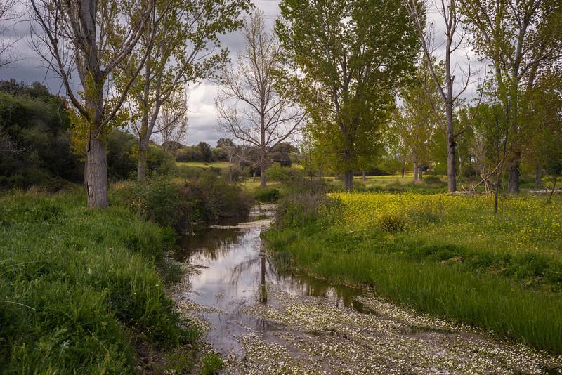 29 de Abril de 2015 - Primavera Arroyo de Tejada ValdelosHielos Tres Cantos