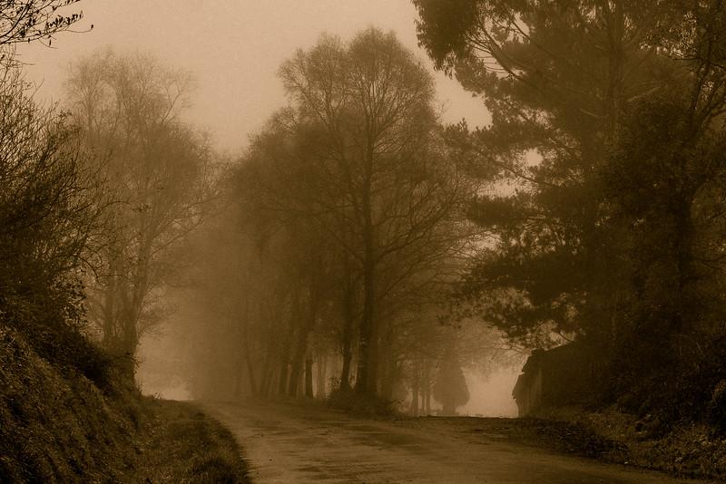 Camino de Santiago Arboles en la niebla. Arzúa