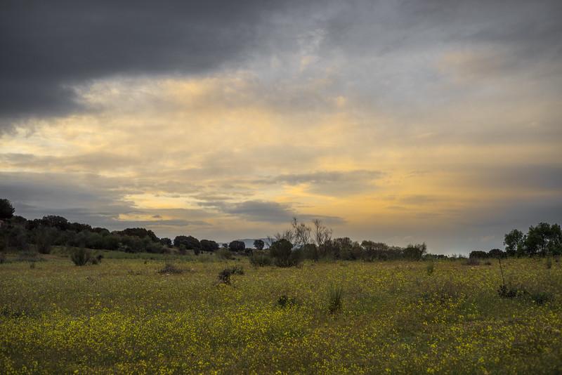 26 de Abril de 2015 - Los días del hombre son com la hierba: Florece como la flor del campo que cuando para el viento, perece. ValdelosHielos. Tres Cantos