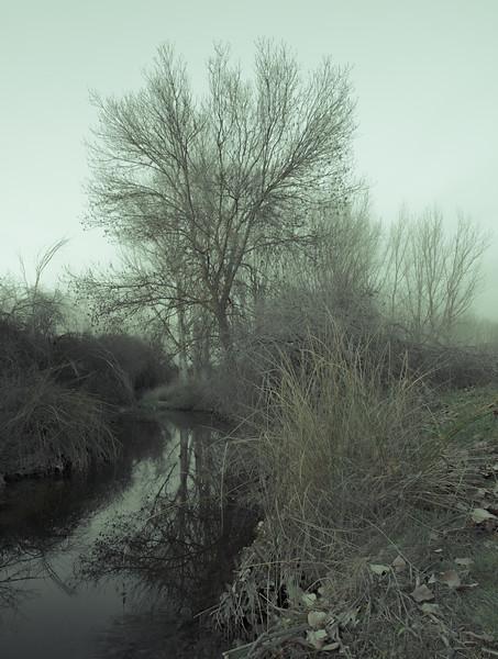 10 de Enero de 2015 - Arroyo de Tejada. Tres Cantos