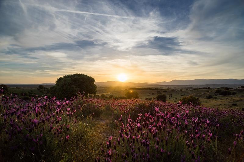 11 de Mayo de 2015 - Contigo entre las flores. ValdelosHielos. Tres Cantos
