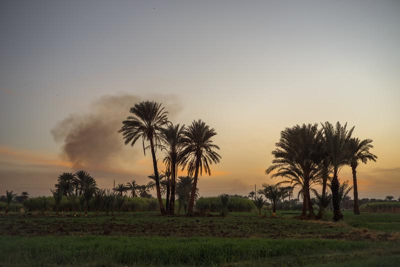 17 de Marzo de 2015 - Campos próximos al hotel Marsam