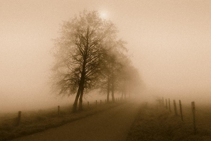 Camino de Santiago Arboles en la niebla. Abadín
