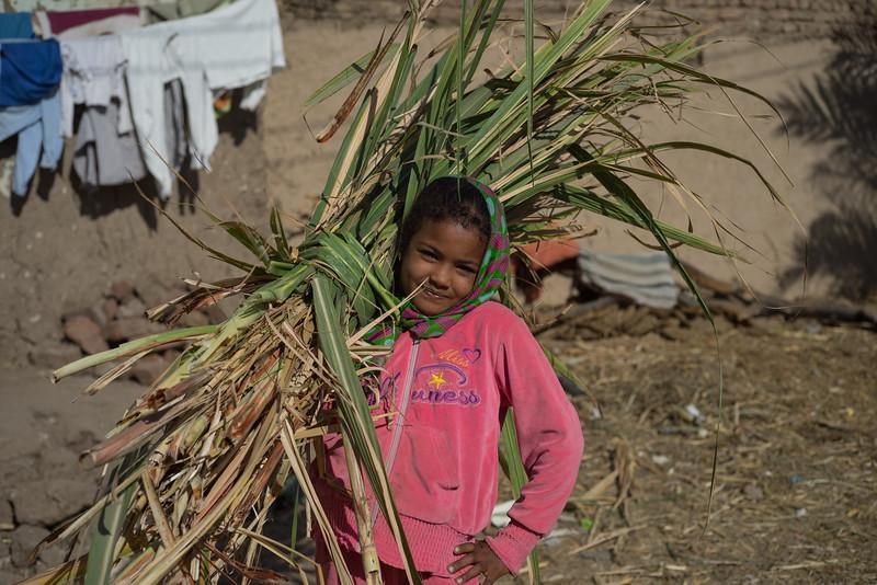 8 de Febrero de 2015 - Recogiendo caña de azucar en Luxor. Egipto