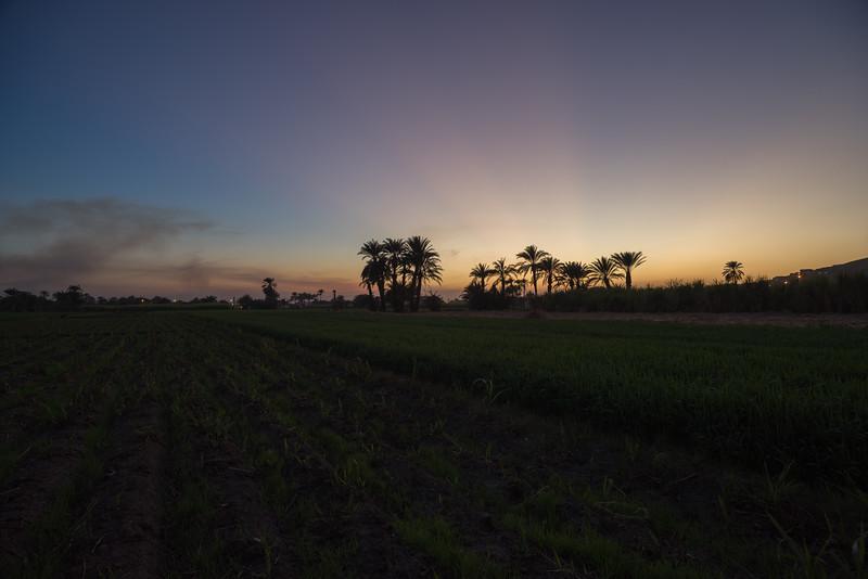 Puesta de sol en los campos próximos al hotel Marsam. Luxor. Egipto
