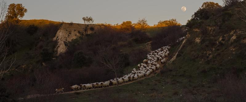5 de Marzo de 2015 - El Perro pastor y la luna. ValdelosHielos. Tres Cantos