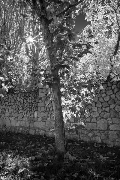 La tapia en Otoño