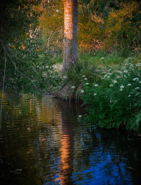 21 de Mayo de 2015 - <br /> Y todo el campo un momento<br /> se queda, mudo y sombrío,<br /> meditando. Suena el viento<br /> en los álamos del río.<br /> (Antonio Machado)<br /> Arroyo de Tejada<br /> Tres Cantos