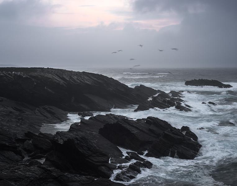 23 de Marzo de 2015 - Gaviotas luchando contra el viento. Ribadeo