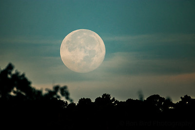 8.4.20 - Luna setting over Escalapia hollow this am.