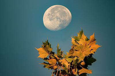 10.5.20 - Luna setting this am.