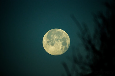 1.29-21 Wolf Moon setting this am.