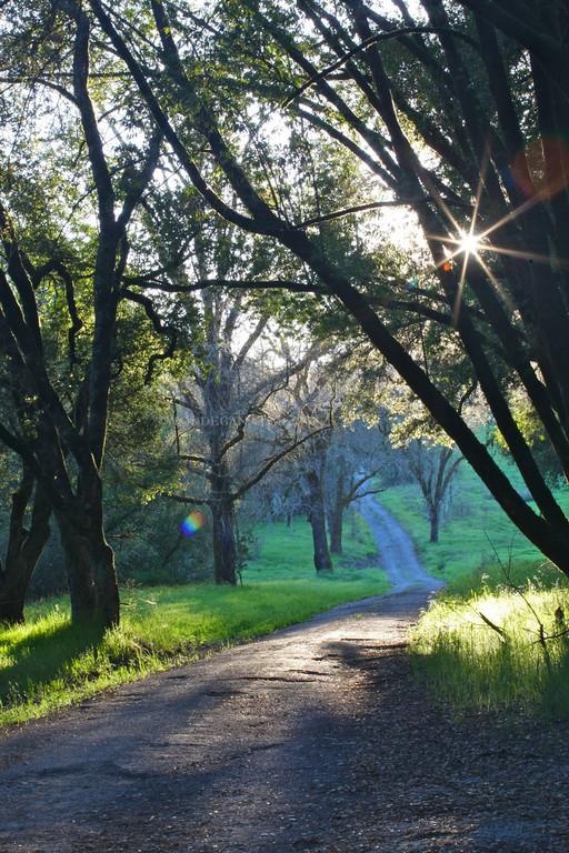 Sonoma County Road 1