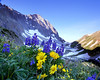 Capitol Peak Wildflowers sunrise
