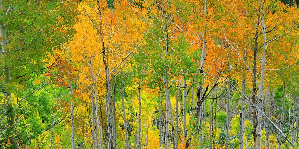 Independence Pass Autumn #1 - Panoramic  Email Todd