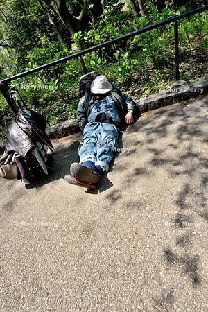 Ueno Park Tokyo Tourists