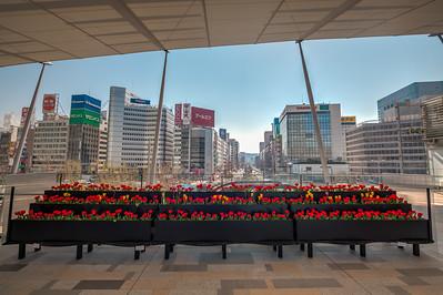 Tulips at Tokyo Station