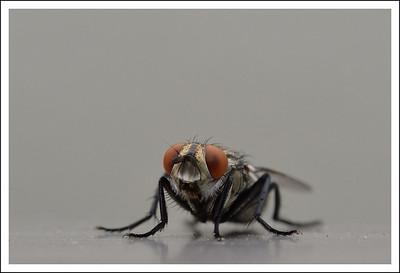 A fly on the balcony railing