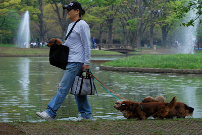 I was so amazed that these dogs were willing to keep their sun glasses on.  This was taken in Yoyogi park.