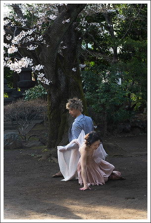 Dance Under the Cherry Tree