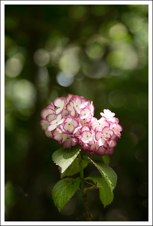There were many varieties of hydrangea that I have never seen before.