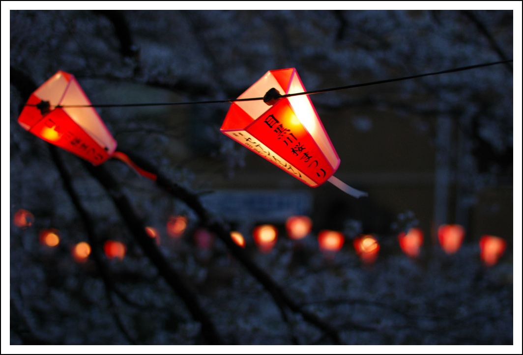 Lanterns along the Meguro river during the cherry blossom festival.