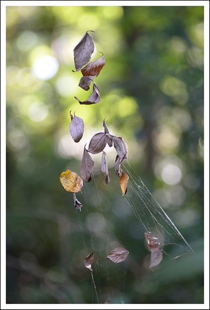 Leaves and spider webs.