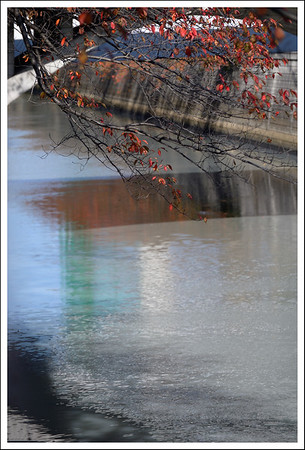 Cherry leaves over the Meguro River.