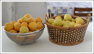 A bumper apricot harvest