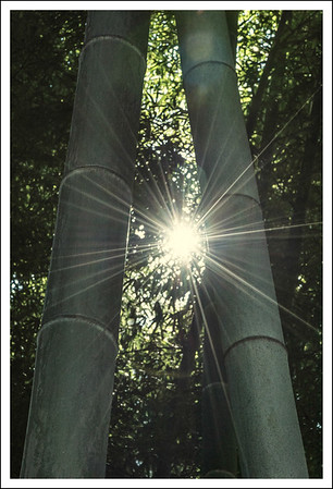 There was a small bamboo grove, which is a little rare in the east (Tokyo/Yokohama) area.  Bamboo trees in this area are usually small and spindly compared to Kyoto. These were quite nice, though.