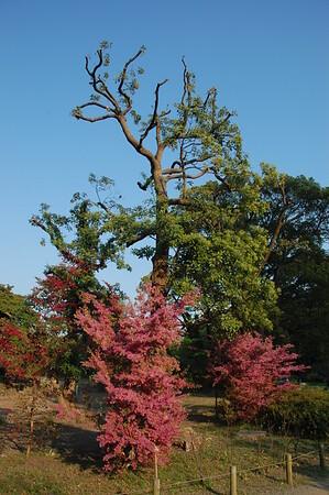Hamarikyu Garden