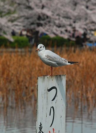 Ueno Park 2010