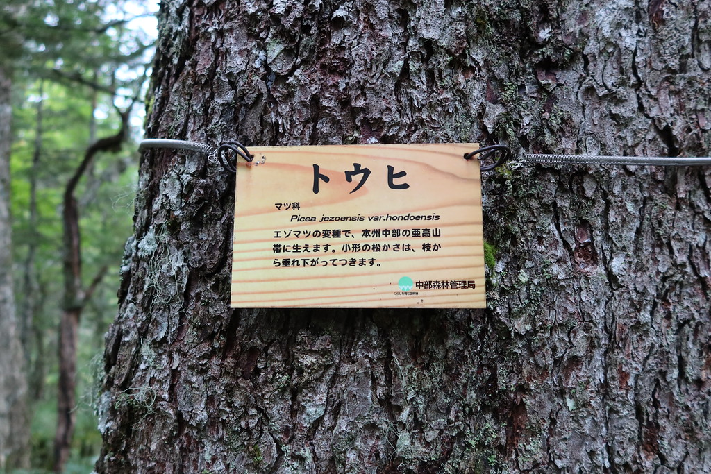 Tohi tree sign