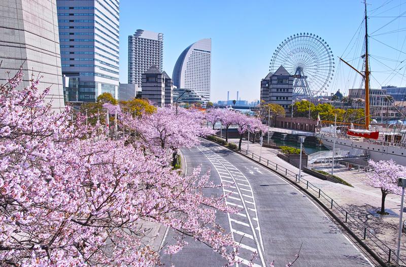 Cherry blossom street in the Minato Mirai distrct. Editorial credit: 7maru / Shutterstock.com