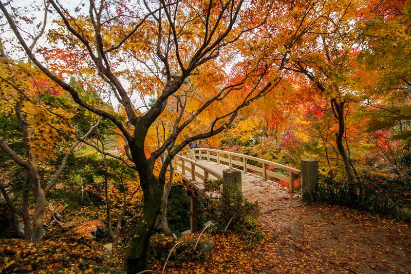 Autumn at Sankeien Garden, Yokohama. Editorial credit: SATHIANPONG PHOOKIT / Shutterstock.com
