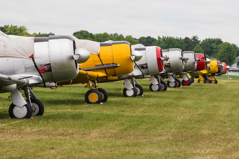 One of several rows of T-6 Texan/Harvards in Oshkosh Warbird Area