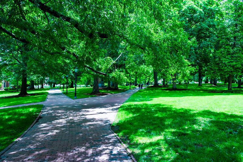 Those Wonderful Trees and Brick Sidewalks
