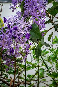 Blooming flowers in tree