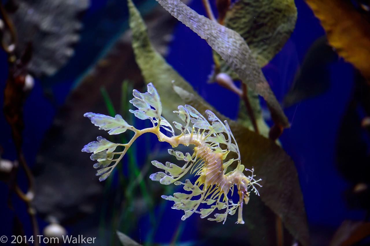 TVW_LB_Aquarium100514-4843