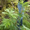 Plant c.1.2m high