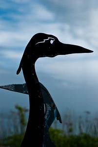 Sea Bird Silhouette | 2009  Odiorne Point State Park | Rye, NH