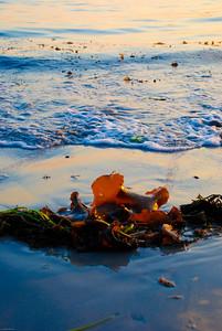 Volcanic Seaweed | 2007  Magnolia Beach | Gloucester, MA