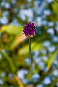 Purple Punch | 2010  Long Hill Reservation |Beverly, MA