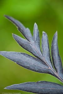 Charcoal Leaf | 2011  Beverly, MA