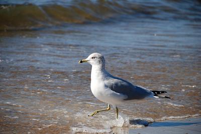 Seagull Pose  |  2007  Niles Beach  |  Gloucester, MA