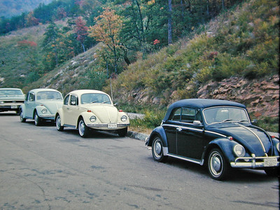 Beetles on the Bypass